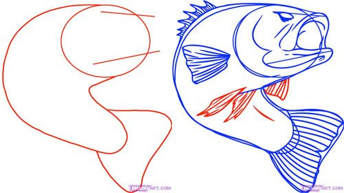 How To Draw The Iconic Leaping Bass Fish Drawing Step By