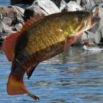 Fishin' Smallies 'On the Jumps'?