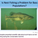 Scientists weigh in on bedding bass