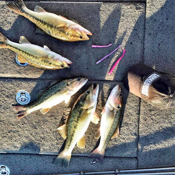 Lunkerhunt-shakey-head-limit-bass-fishing-151231